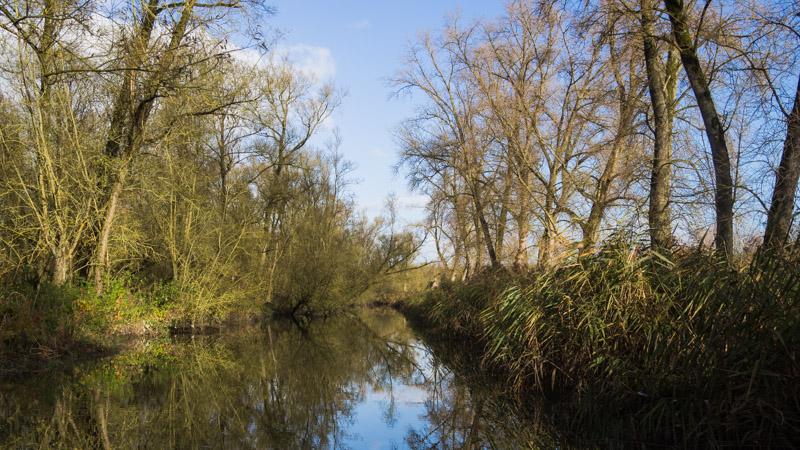 Varen door de Biesbosch - water 2