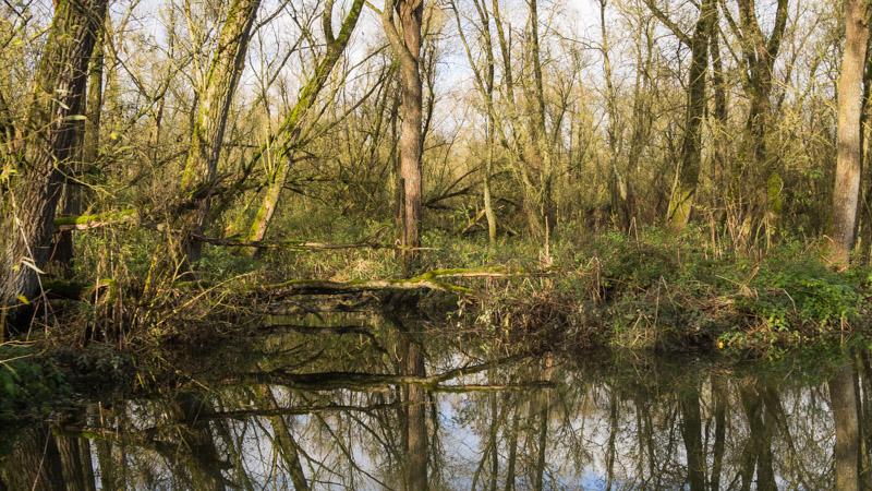 Varen door de Biesbosch - oever
