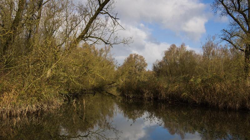 Varen door de Biesbosch - water