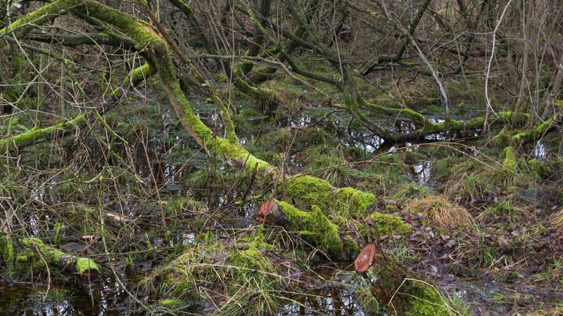 Bomen met mos en water
